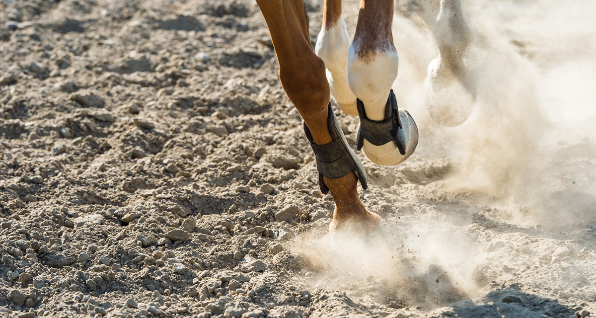 Horse legs on all weather surface, hooves kicking up dust